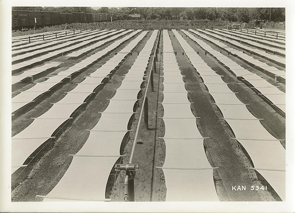 View of Manhattan SCS Nursery\'s conifer seed beds, 7/1/1937.
