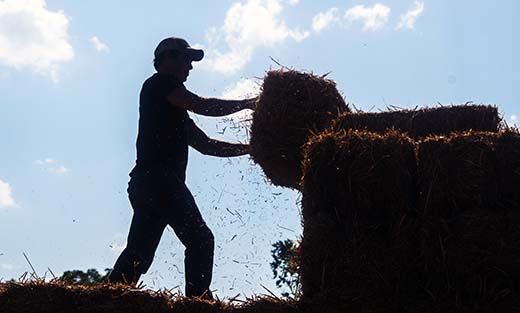 John Snider loads hay. He usually runs two feed stores, but during harvest everyone pitches in.