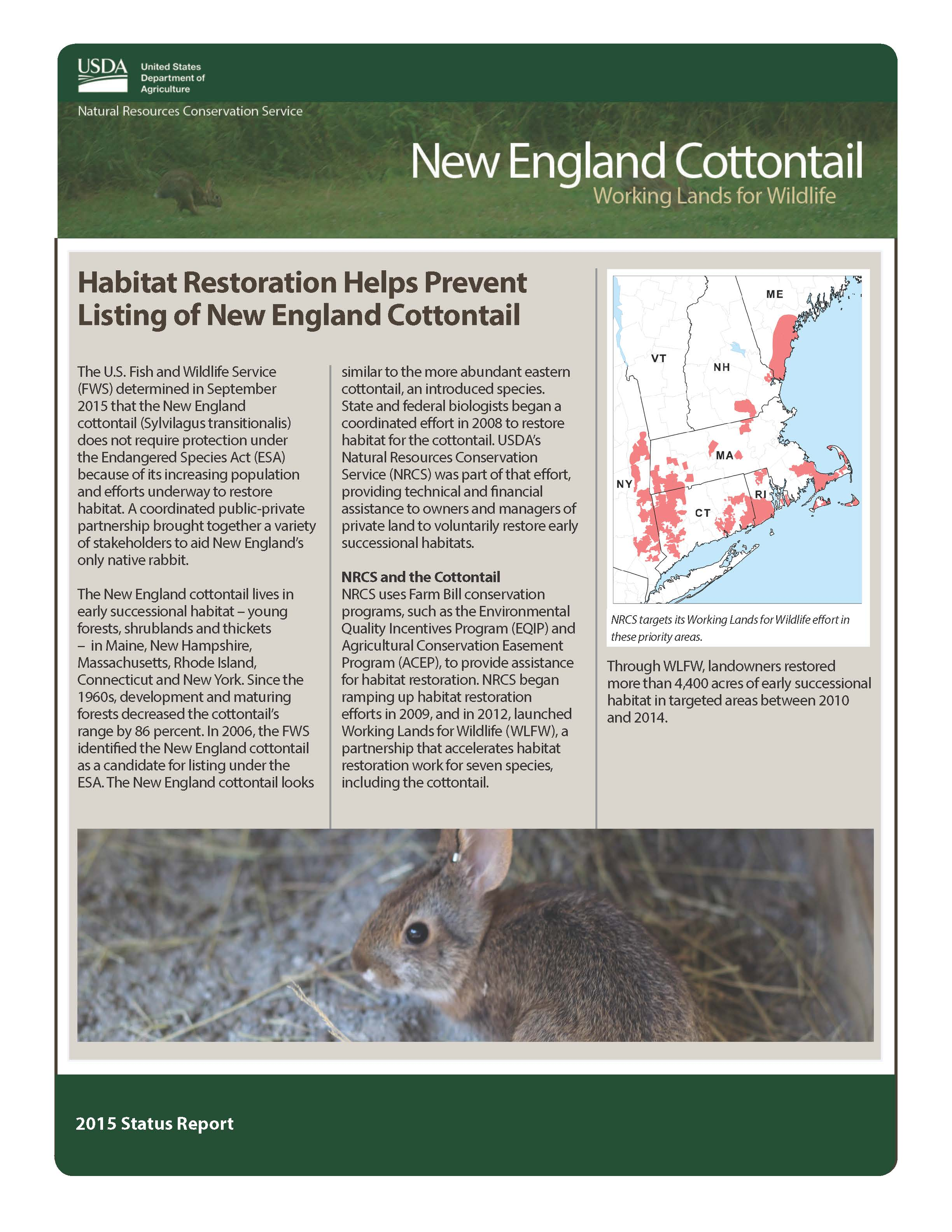 New England Cottontail Status Report