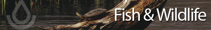 Fish and Wildlife Banner