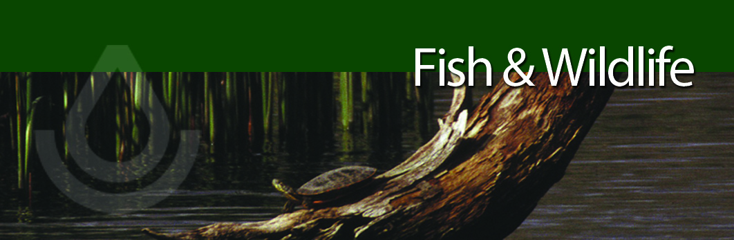 Fish and Wildlife header graphic