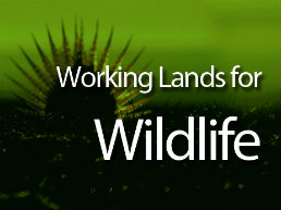 working lands for wildlife nav ad