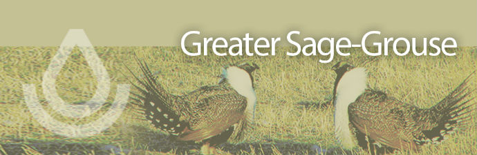 Working Lands For Wildlife banner, Sage Grouse