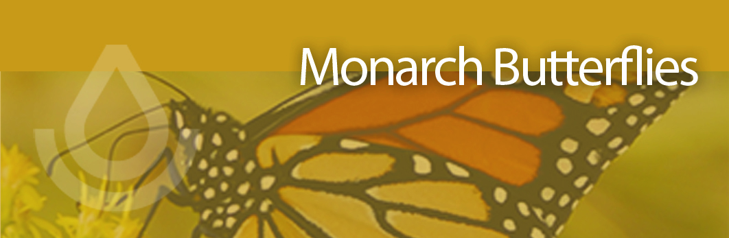 Monarch Butterfly copy