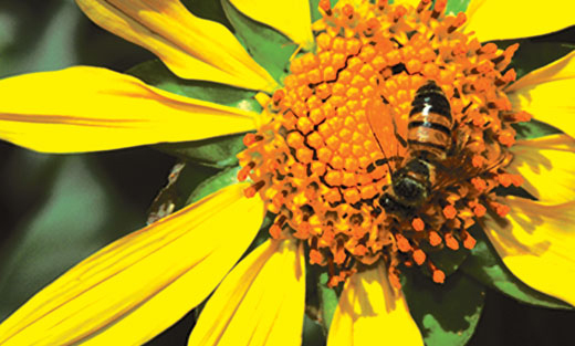 Learn more about NRCS conservation work for honey bees