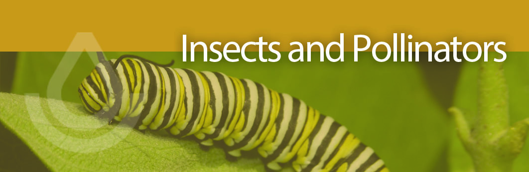 NEW Insect and Pollinator header