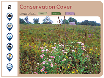 Conservation Cover
