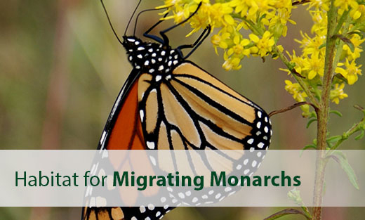 Monarch feature