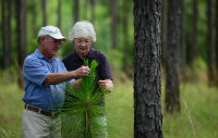 Man and woman standing in a forest, examining young longleaf pine.