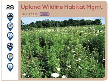 Upland Wildlife Habitat Management