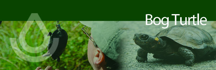 Working Lands For Wildlife banner, Bog Turtle