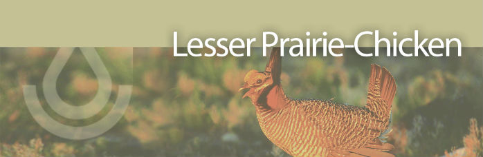 Working Lands For Wildlife banner, Lesser Prairie Chicken