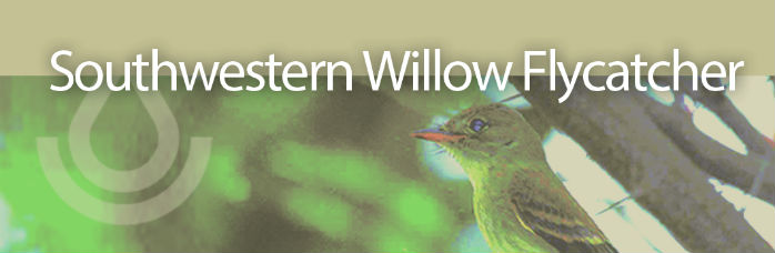 Working Lands For Wildlife banner, Southwestern Willow Flycatcher