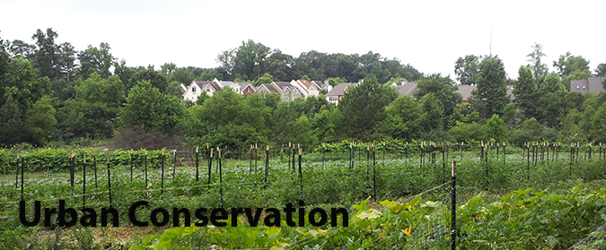 Urban Agriculture Header Graphic