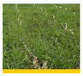 Small image of a cover crop linking to more information on this practice.