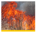 Small image of prescribed burning linking to more information about this practice.
