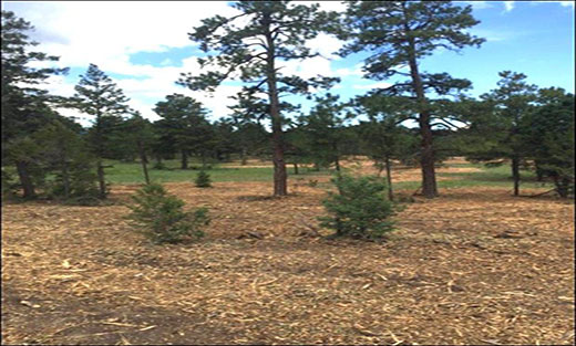 Picture of the Isleta Collaborative Landscape Restoration Project