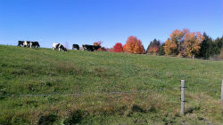 Fencing and pasture management in the Rock River Watershed