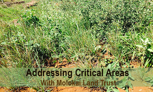 Addressing Critical Areas With Molokai Land Trust