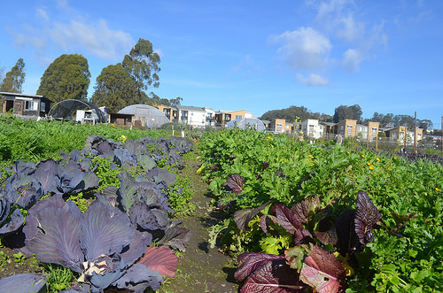 Field crops on the Homeless Garden Project. NRCS photo