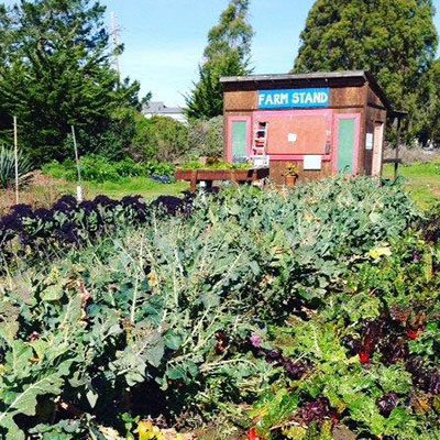 The Homeless Garden Project in Santa Cruz, California provides sanctuary, refuge and meaningful work for homeless citizens within the healing environment of a three-acre organic farm.