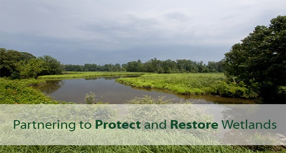 Partnering to Protect and Restore Wetlands