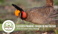 lesser prairie-chicken initiative conservation strategy cover thumbnail