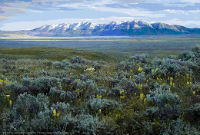 Photo of Montana rangelands with mountain big sagebrush, Idaho fescue and Indian paintbrush.