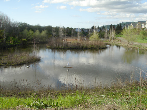 Small, shallow body of water with a single white wading bird perched on a log in the center.