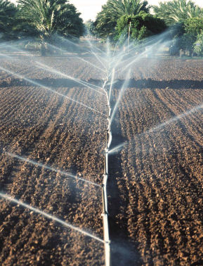 sprinkle irrigation photo, link to water management