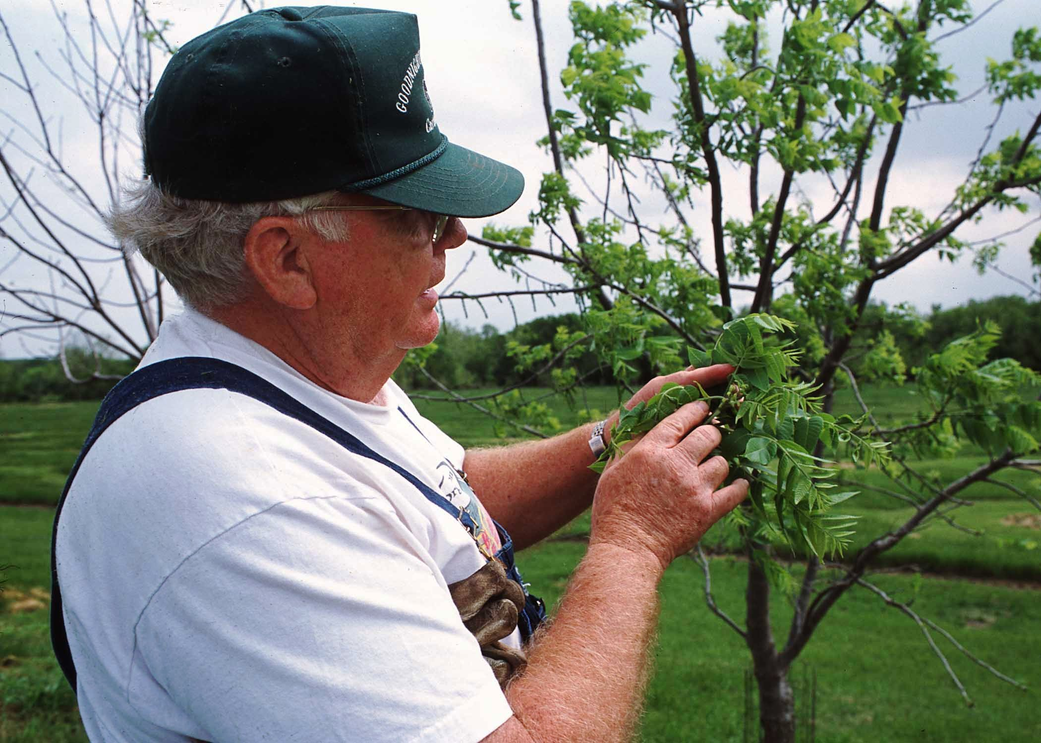Man inspecting young tree for insects