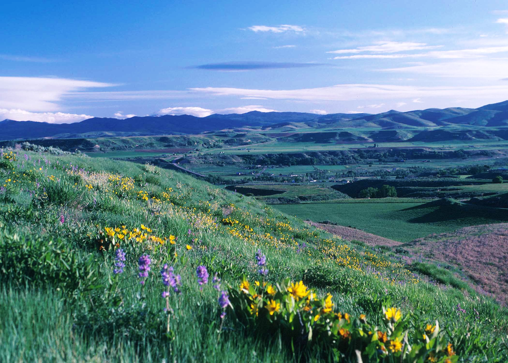 Beautiful image of mountains in background and wildflowers in foreground