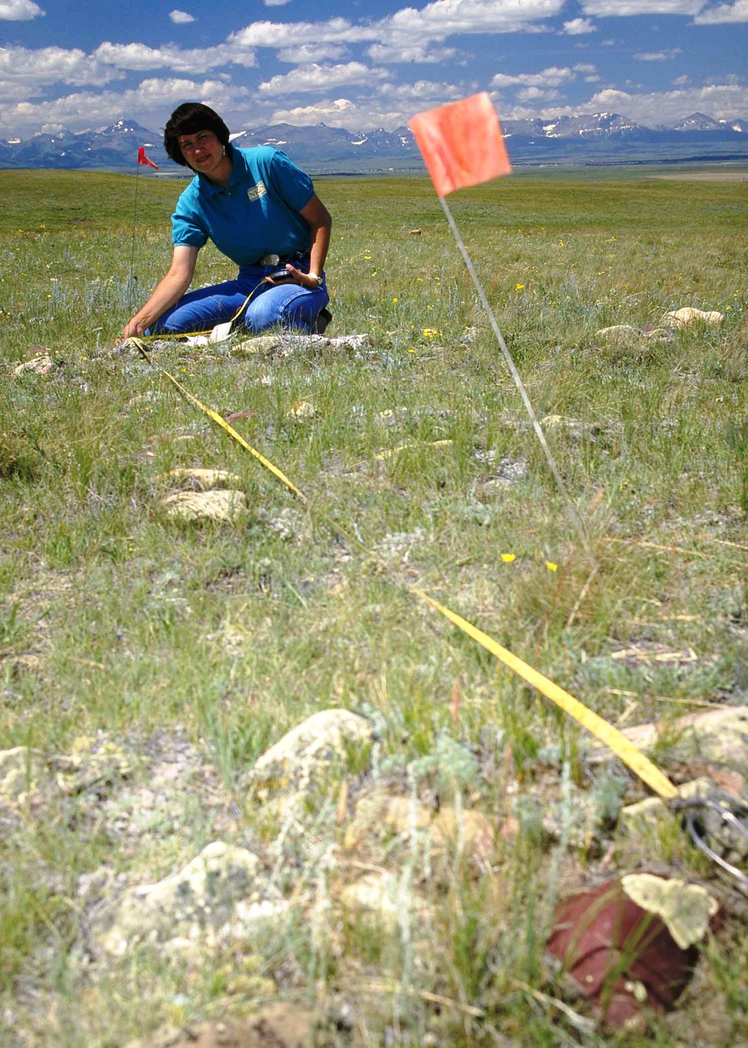 Lady stretching measuring tape from a small flag during field survey.