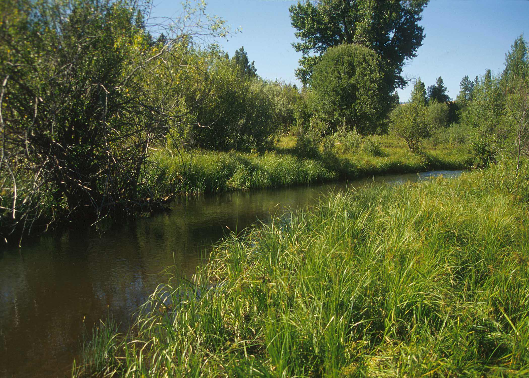photo of idaho stream buffer