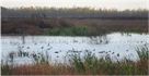 Wetland easement in Arkansas showing grasses, a pond, ducks and swampforest