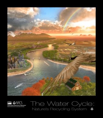 Water Life Cycle Poster