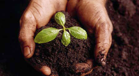 Seedling in Hand