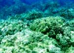 West Maui Coral Reef Initiative