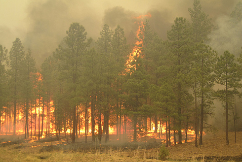 2011 Wallow Fire, site near Nutrioso, Arizona