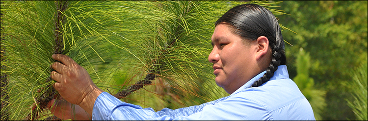 The Alabama-Coushatta Tribe of TX works to restore longleaf pine forests on their reservation.