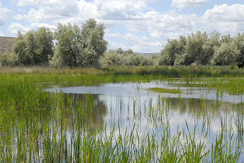 Restored wetland in central Washington.