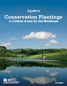 Cover of the publication A guide to Conservation Plantings on Critical Areas for the Northeast