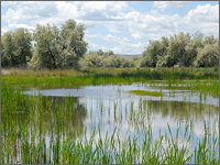 Restored Wetlands Provide Recreation to Disabled Vets