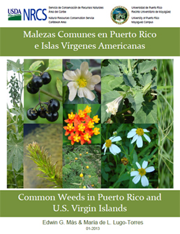 Picture of cover page of Common Weeds in Puerto Rico and U.S. Virgin Islands