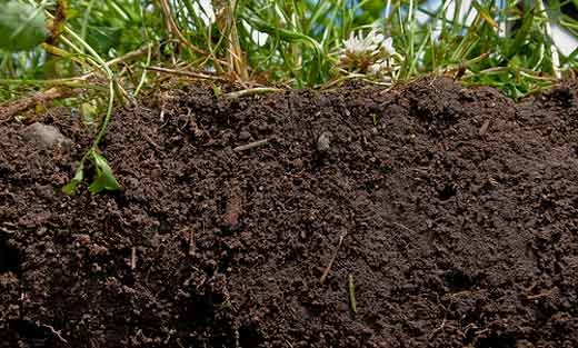 Image of soil beneath growing grass