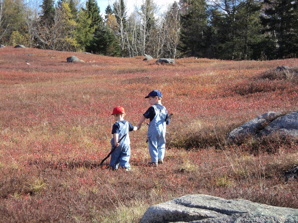 Boys walking in blueberry fields