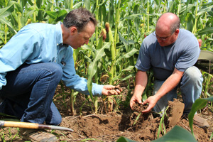 NRCS agronomist Tom Akin (left) and Jim Ward examine health soil in a no-till corn field