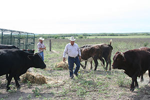 Leo Serna Jr. and his dad, Leopoldo Serna, feed cattle at the Tres Venadas Ranch.