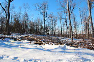 The Banas forestry project site after thinning.