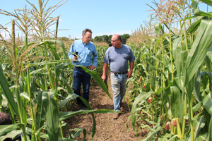An NRCS conservationist walks with a farmer through his cornfield.